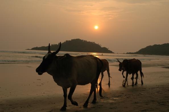 India 05 - Foto por Mi Lawrence