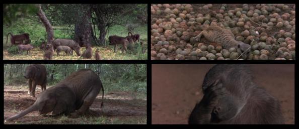 Los Animales Son Gente Maravillosa, Jamie Uys - La Marula