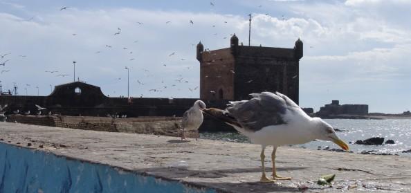 Puerto de Essaouira, Marruecos - Foto por Mi Lawrence