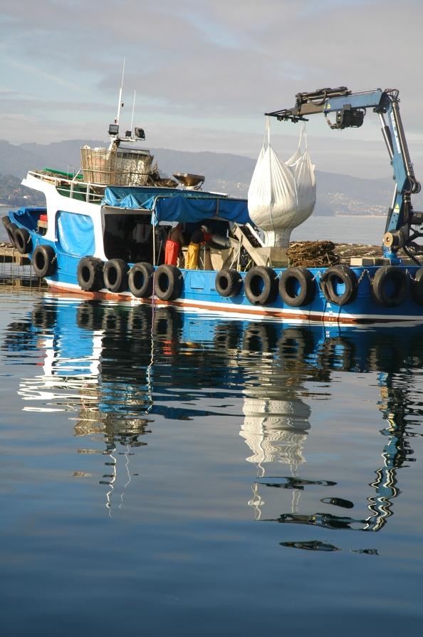 Recogiendo mejillones de las bateas. Ría de Pontevedra. Foto por Mi Lawrence