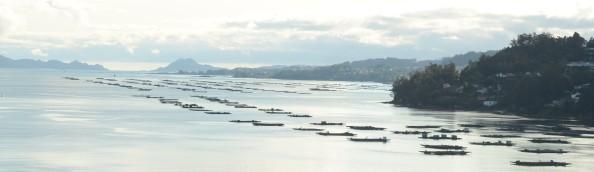 Pontevedra en el Cóndor 2012 - Ría de Vigo - Foto por Mi Lawrence
